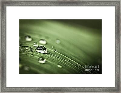 Raindrops On Leaf Framed Print by Elena Elisseeva