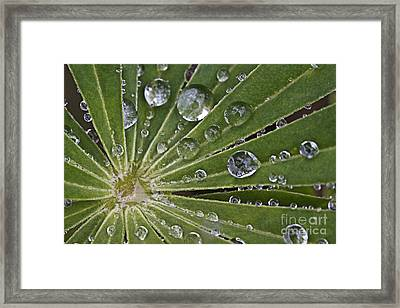 Raindrops On Lupin Leaf Framed Print by Heiko Koehrer-Wagner