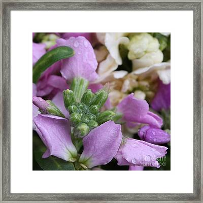 Raindrops On Purple And White Flowers Framed Print by Carol Groenen