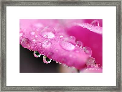 Raindrops On Roses Framed Print by Kaye Menner