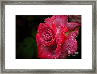 Raindrops On Roses Framed Print by Peggy J Hughes