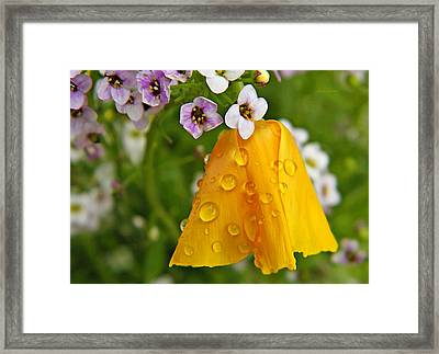 Rained Upon Framed Print by Chris Berry