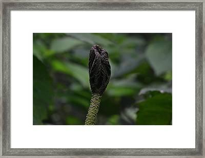Rainforest Pod Framed Print by Bill Mock