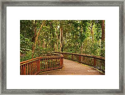 Rainforest Walkway Framed Print by Bob and Nancy Kendrick