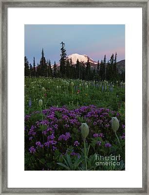 Rainier Pastel Dawn Framed Print by Mike  Dawson