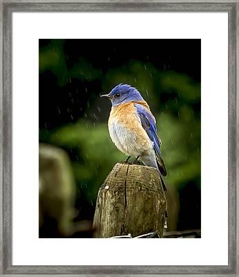 Raining Framed Print by Jean Noren