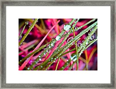 Raindrops Framed Print by Marianna Mills