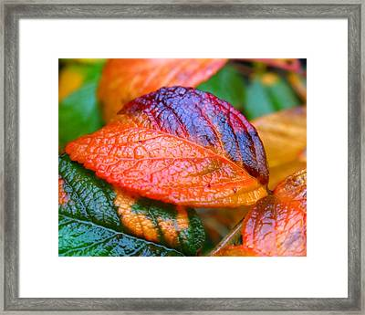 Rainy Day Leaves Framed Print by Rona Black