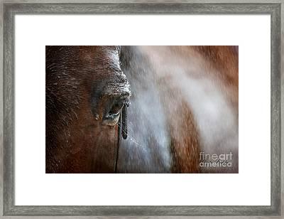 Rainy Thoughts Framed Print by Dorota Kudyba