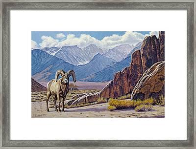 Ram-eastern Sierra Framed Print by Paul Krapf