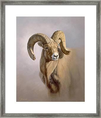 Ram Portrait Framed Print by Paul Krapf
