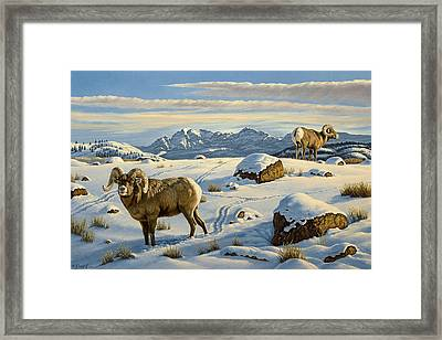 Rams Down From Junction Butte Framed Print by Paul Krapf