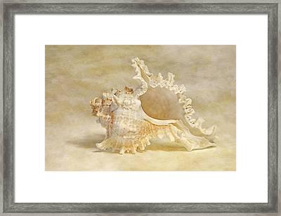 Ram's Murex Framed Print by Cindi Ressler