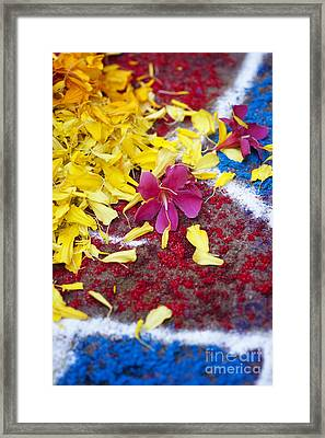 Rangoli Festival Art With Flower Petals Framed Print by Tim Gainey