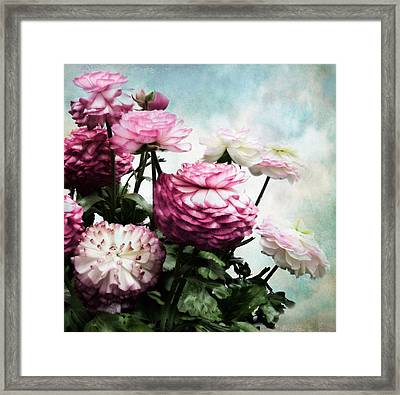 Ranunculus In Bloom Framed Print by Jessica Jenney