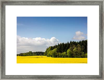 Rape Field And Forest Framed Print by Pati Photography