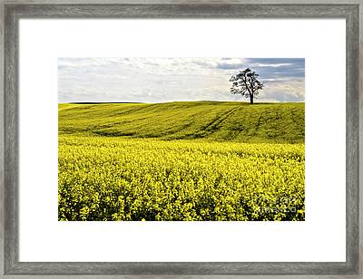 Rape Landscape With Lonely Tree Framed Print by Heiko Koehrer-Wagner