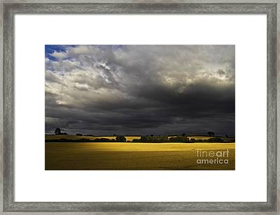 Rapefield Under Dark Sky Framed Print by Heiko Koehrer-Wagner