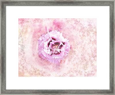 Raspberry Dianthus Framed Print by Gena Weiser