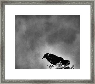 Raven Framed Print by Dan Sproul