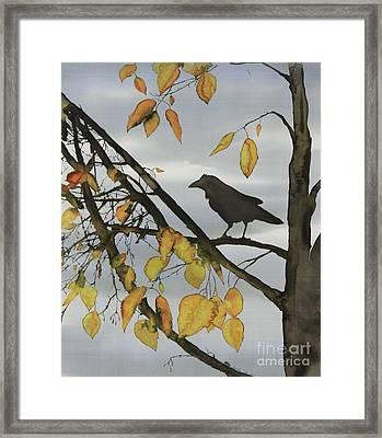 Raven In Birch Framed Print by Carolyn Doe