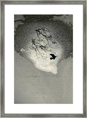 Raven Reflection Framed Print by Cambion Art