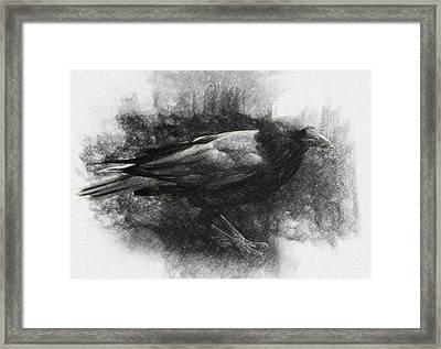 Raven Framed Print by Taylan Soyturk
