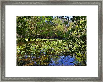 Ravine Gardens - A Different Look At Florida Framed Print by Christine Till