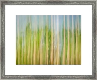 Reach For The Sky Framed Print by Carolyn Marshall