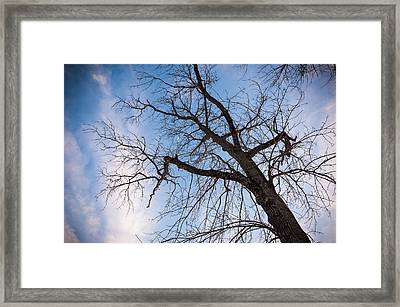 Reach For The Sky Framed Print by Kristopher Schoenleber