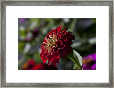 Reaching Framed Print by Doug Norkum