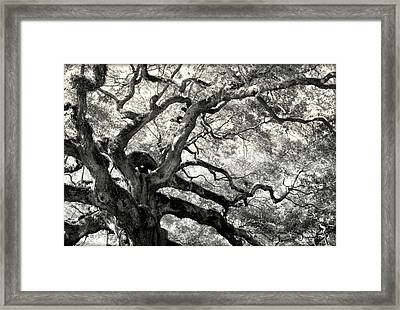 Reaching For Heaven Framed Print by Karen Wiles
