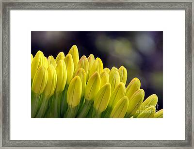Reaching Out Framed Print by Dan Holm