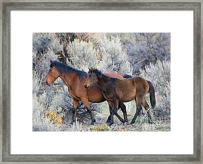 Ready For Winter Framed Print by Mike Dawson