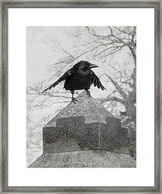 Ready To Fly Framed Print by Gothicolors Donna Snyder