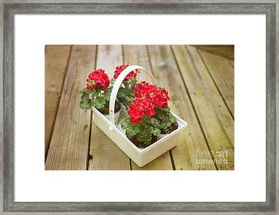 Ready To Plant Framed Print by Kay Pickens