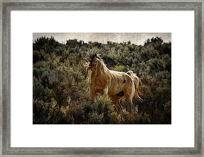 Ready To Rumble D9637 Framed Print by Wes and Dotty Weber