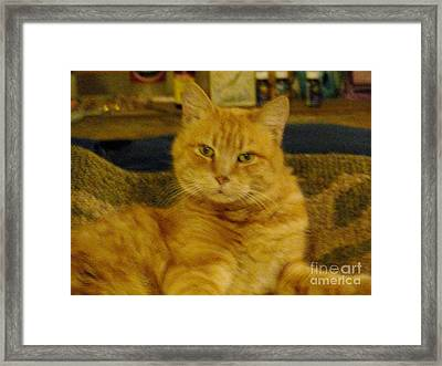 Really? Framed Print by Jacquelyn Roberts
