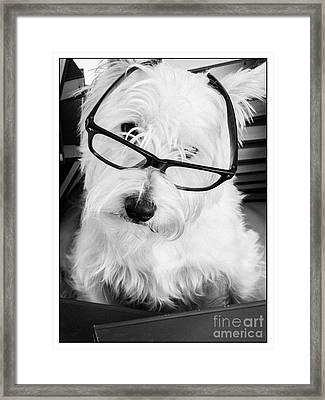 Really Portait Of A Westie Wearing Glasses Framed Print by Edward Fielding