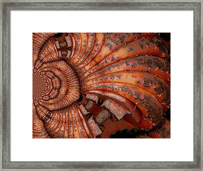 Recoiled 2 Framed Print by Wendy J St Christopher