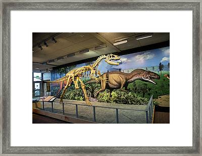 Reconstruction Of Allosaurus Framed Print by Jim West