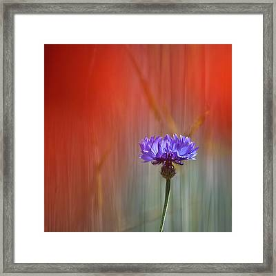 Red And Blue Framed Print by Heiko Koehrer-Wagner