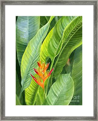 Red And Gold Heliconia Framed Print by Sharon Freeman
