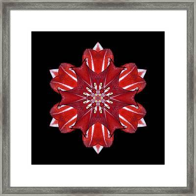 Red And White Amaryllis Vii Flower Mandala Framed Print by David J Bookbinder