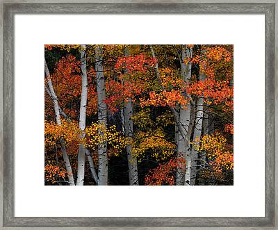 Red And Yellow Framed Print by Leland D Howard