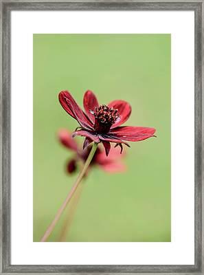 Red Autumn Flower  Framed Print by Toppart Sweden