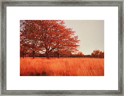 Red Autumn Framed Print by Violet Gray