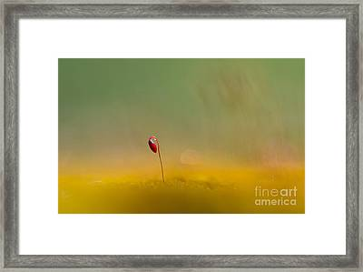 Red Beauty Framed Print by Jaroslaw Blaminsky