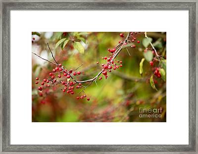 Red Berries Framed Print by Rebecca Cozart