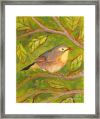 Red-billed Leiothrix Framed Print by Anna Skaradzinska